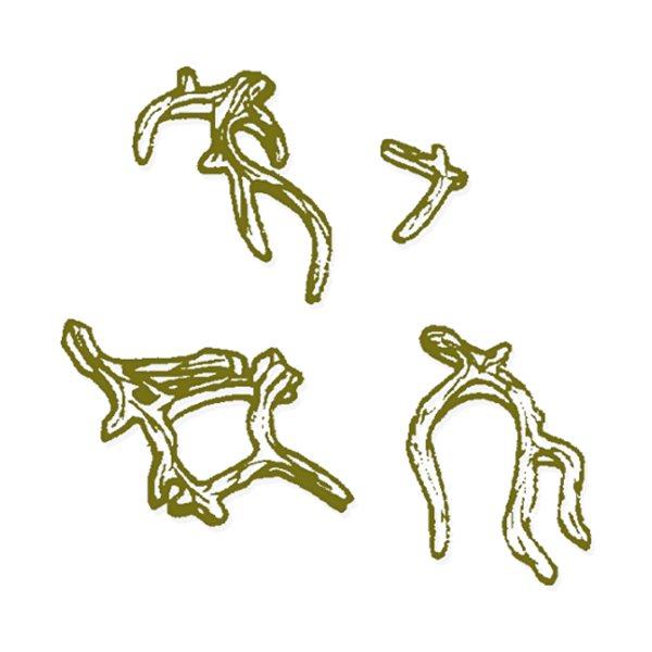 Odyssey - Branch Set