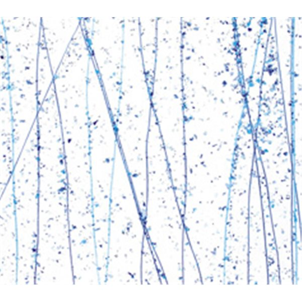 Bullseye Royal Blue, Turquoise & Cobalt Blue on Clear Base - Collage - 3mm - Single Rolled - Fusible Glass Sheets