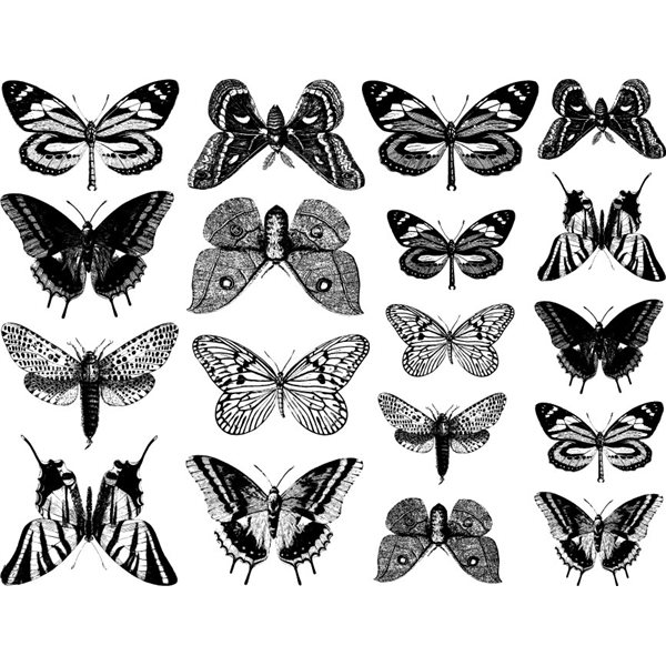 Decal - Butterflies - Black - 14x10 cm