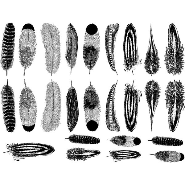 Decal - Small Feathers - Black - 14x10 cm