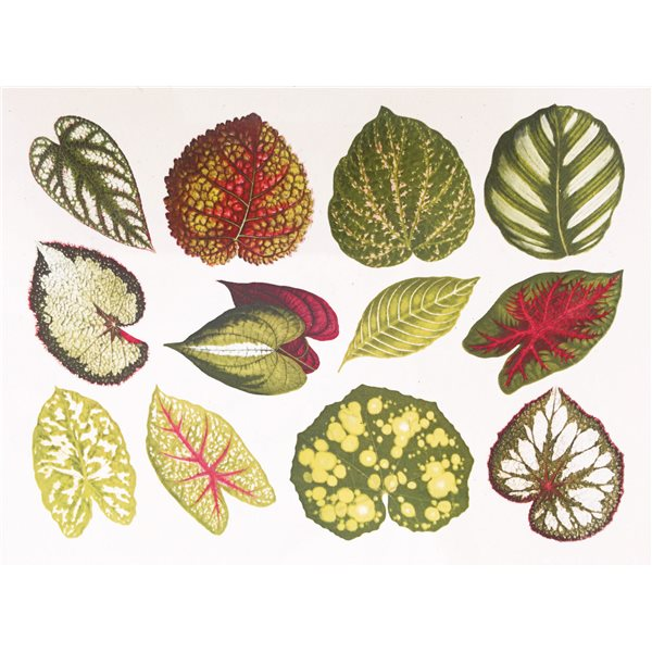Decal - Small Leaves - Colour - 14x10 cm