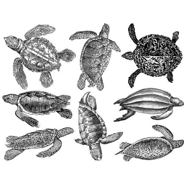 Decal - Sea Turtles - Black - 14x10 cm