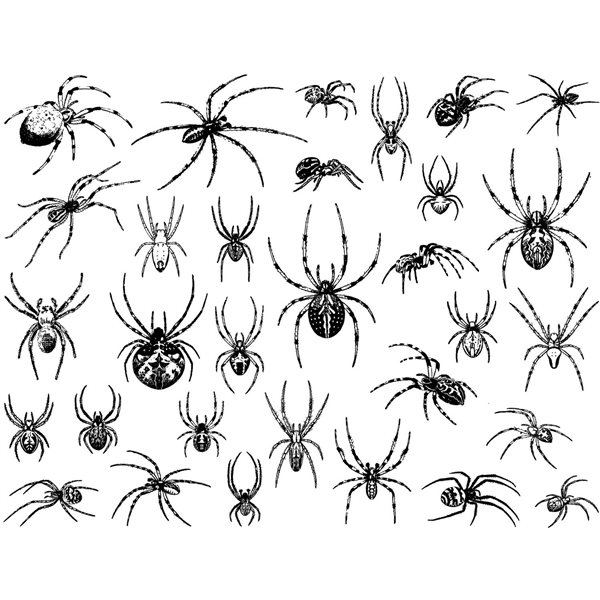 Decal - Spiders - Black - 14x10 cm