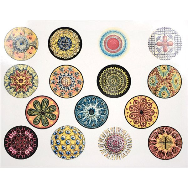Decal - Circles - Colour - 14x10 cm - Non-Food Safe