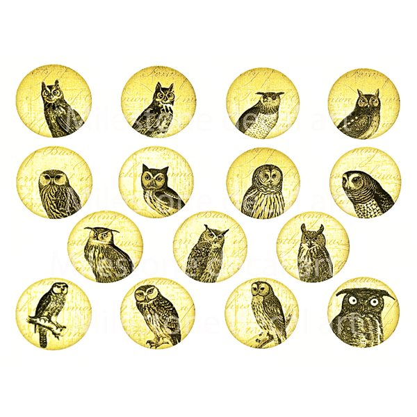 Decal - Owl Circles - Colour - 14x10 cm - Non-Food Safe