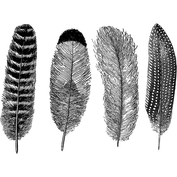 Decal - Feathers - Black - 14x10 cm