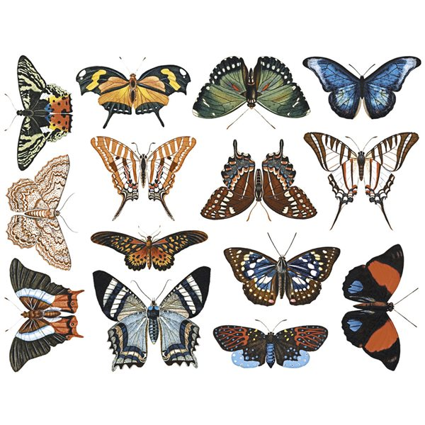 Decal - Small Butterflies - Colour - 14x10cm - Non-Food Safe
