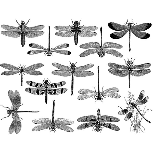 Decal - Dragonflies - Black - 14x10 cm